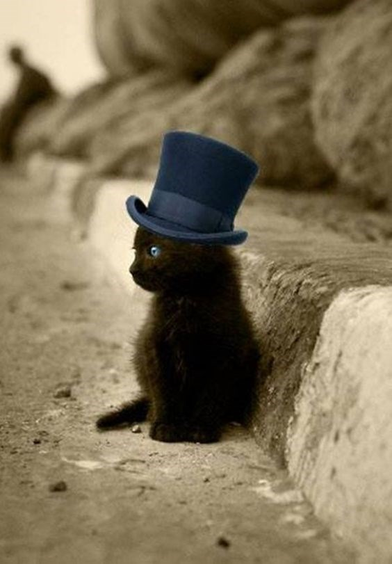 A small kitten with a blue top hat - cover picture for a list of pictures of fancy looking cats.