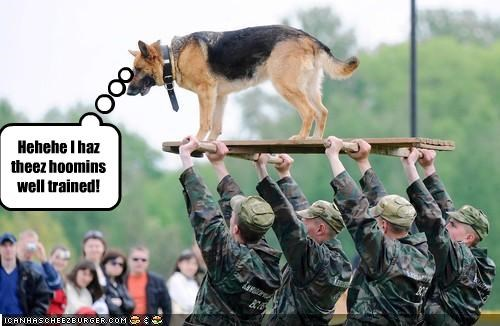 german shepherd humans military respect trained worship - 2166839040