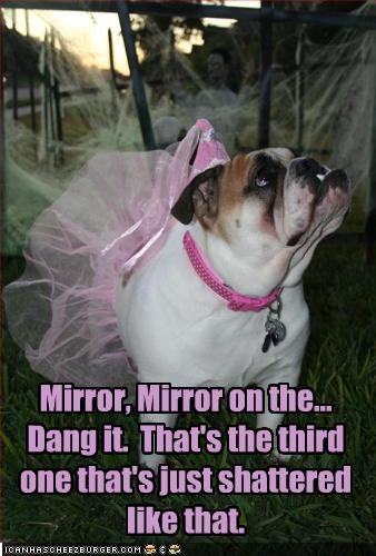 ballerina,broken,bulldog,costume,mirror,snow white
