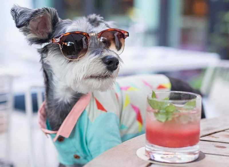 Funny picture of a dog wearing sunglasses and a vacation outfit - cover image for list of hotels that will pamper both you and your pet.