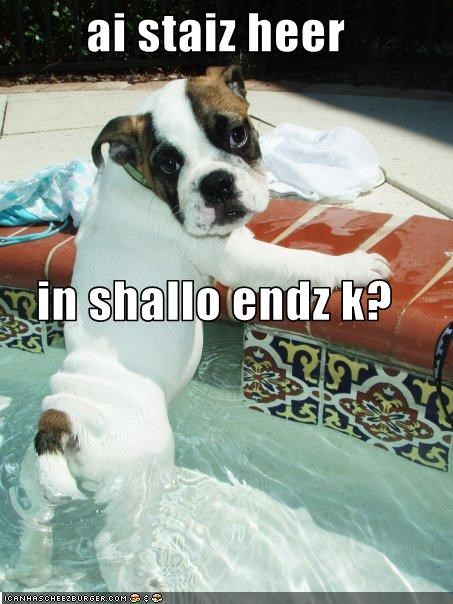 swimming bulldog shallow end careful shy puppy pool nervous - 2167698688
