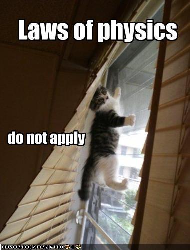 cute kitten physics - 2168873216