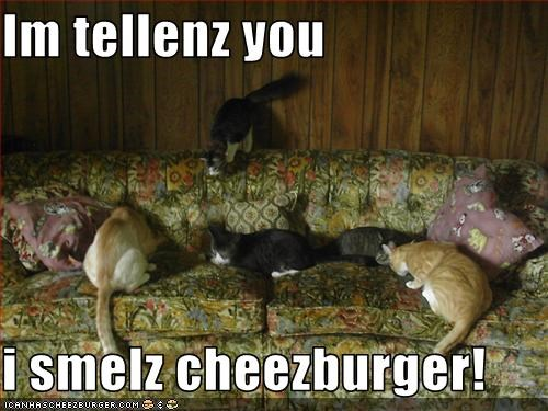 Cheezburger Image 2169429760