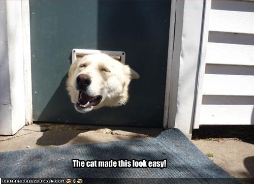 doggie door,easy,labrador,lolcats,stuck