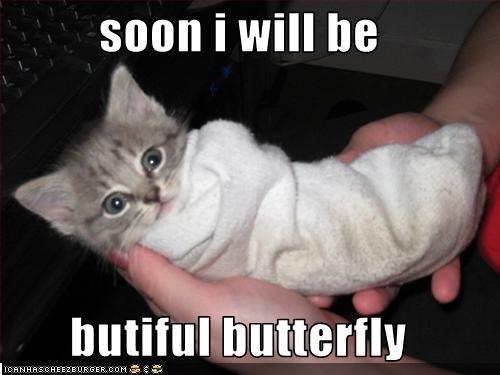 butterfly cute kitten - 2170518784