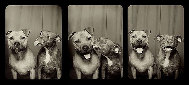 dogs list cute photo booth - 217093