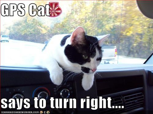 GPS Cat says to turn right     - Cheezburger - Funny Memes | Funny