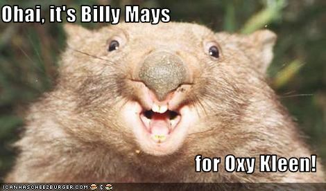 ohai it s billy mays for oxy kleen cheezburger funny memes