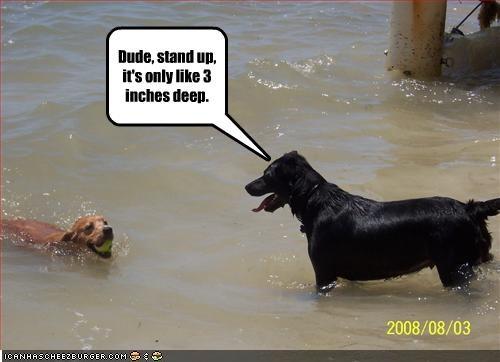 ball beach deep labrador ocean shallow water - 2173678848