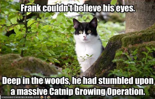 catnip outside shocked - 2173824256