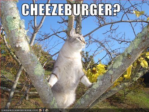Cheezburger Image 2174081280