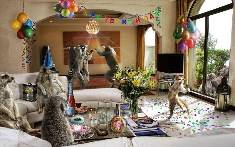 Funny picture of Lemur's having a dance party - cover image for ten photos of animals having a party.