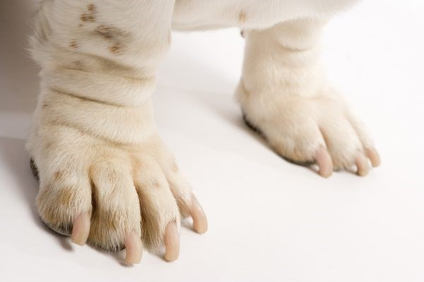 Picture of dog's front feet/paws. Cover graphic for house cleaning tips for pet owners
