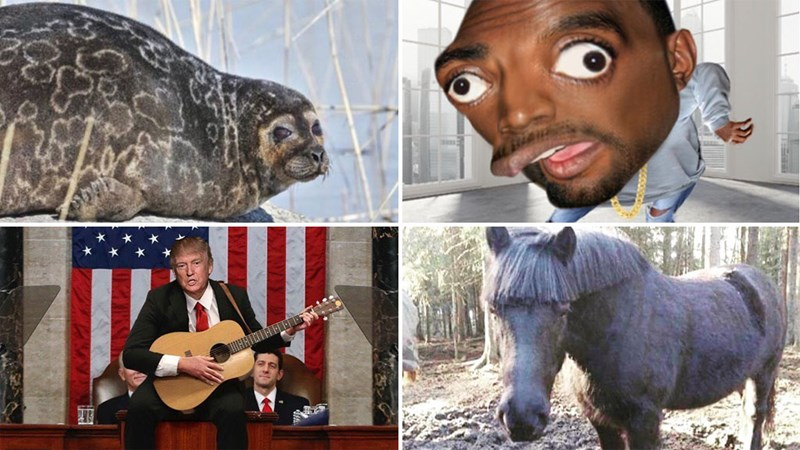 Collection of funny memes from Instagram about Donald Trump, Batman, dating, sex, dogs, seals, eating, freindship, kanye west, wonderwall, blow jobs, the rock, SNL, dating, moms, wednesdays.