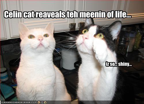 Celin cat reaveals teh meenin of life... iz so... shiny...