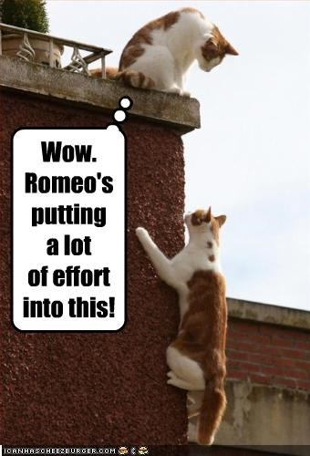 climbing,love,romeo