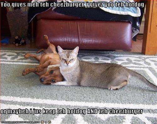 Cheezburger Image 2182438656