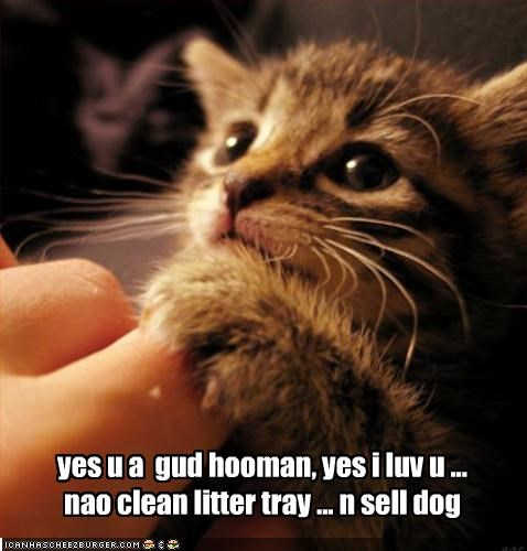 yes u a  gud hooman, yes i luv u ... nao clean litter tray ... n sell dog