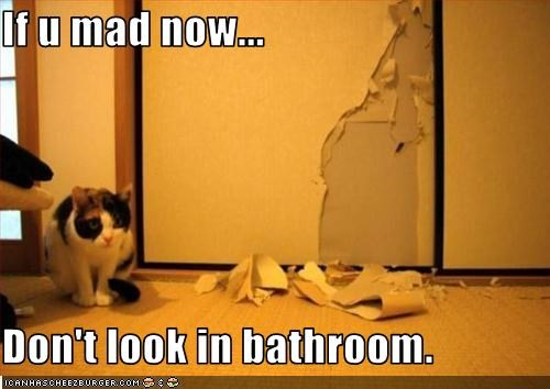 bad cat bathroom destruction mad mess - 2183292160
