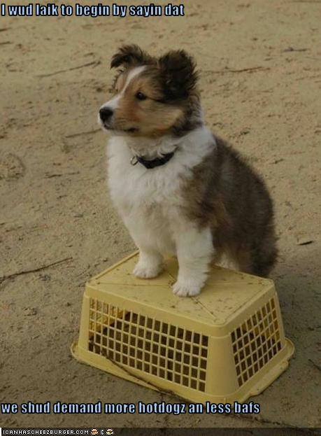 bath demands hotdog political puppy shetland sheepdog speech