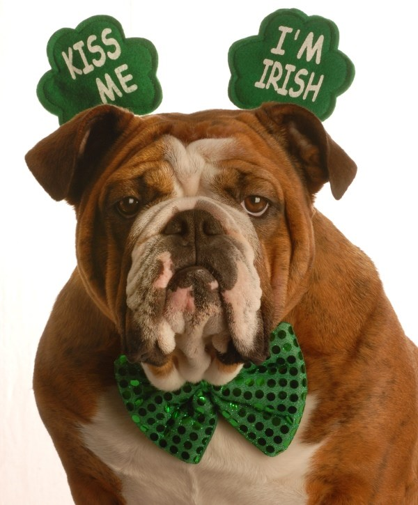 cute animals on st patricks