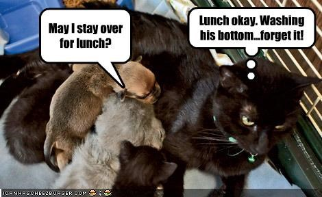 May I stay over for lunch? Lunch okay. Washing his bottom...forget it!