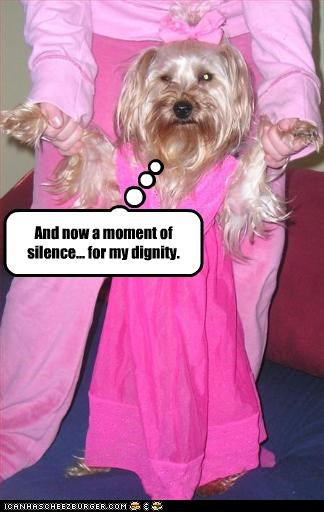 costume,dignity,embarrassing,FAIL,pink,silence,silky terrier