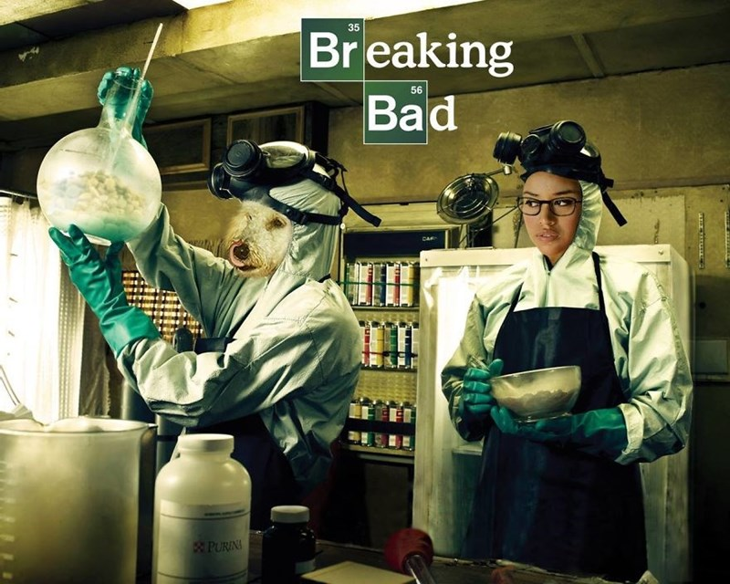Photos of dog as the hero of tv shows - Cover image of Breaking Bad with dog and owner cooking in the kitchen.