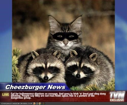 Cheezburger Image 2190458112