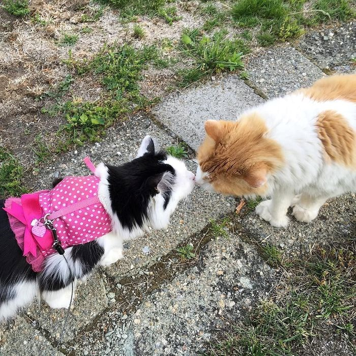 adorable love story between two cats - cover image of two cats smelling each other's noses.
