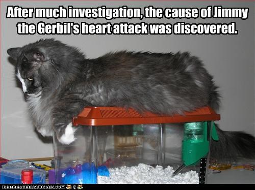 After much investigation, the cause of Jimmy the Gerbil's heart attack was discovered.