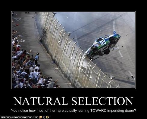 nascar,natural selection