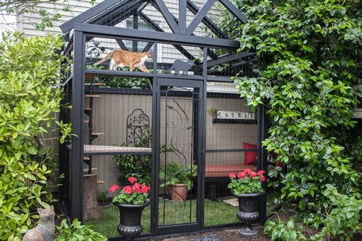 Cool catio spaces for cat owners - Cover image of cat patio in a back yard.
