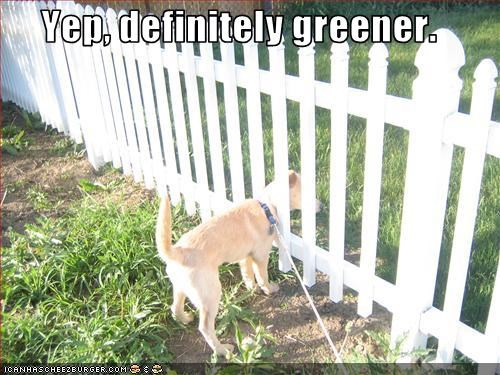 fence grass green lawn whatbreed - 2193279232
