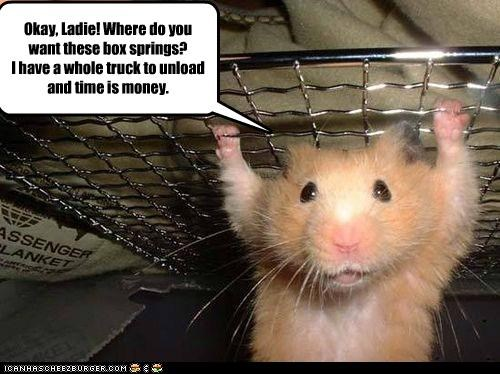 helping lolhamsters moving strong work - 2194517760