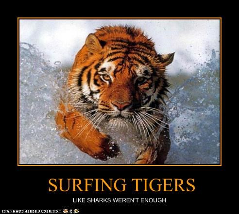 SURFING TIGERS LIKE SHARKS WEREN'T ENOUGH