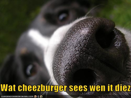 Cheezburger Image 2195262208