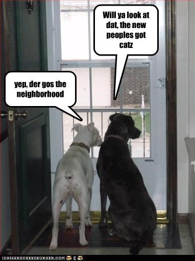 Will ya look at dat, the new peoples got catz yep, der gos the neighborhood
