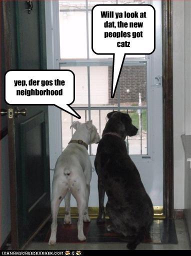 door gossip labrador lolcats neighbors pitbull - 2195282176