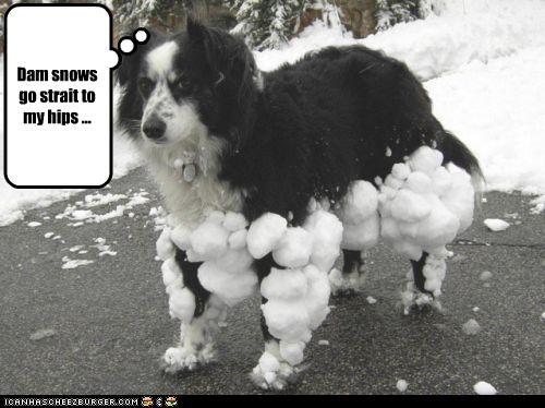 balls border collie cling ons hips legs snow stuck - 2196272896
