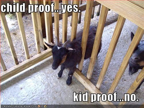 cute lolgoats stuck - 2196366080