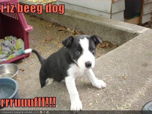 Cheezburger Image 219655424