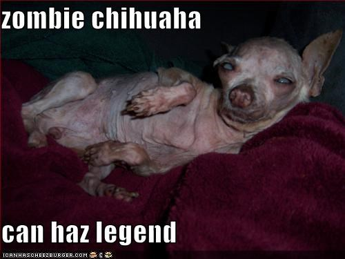 Zombie Chihuaha Can Haz Legend Cheezburger Funny Memes Funny
