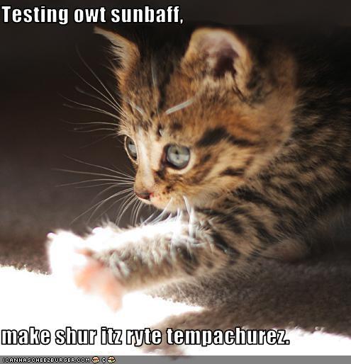 baff cute kitten sunshine - 2198384896