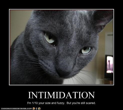 INTIMIDATION I'm 1/10 your size and fuzzy. But you're still scared.