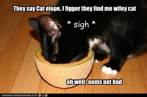 They say Cat elope, I figger they find me wifey cat oh well, noms not bad * sigh *
