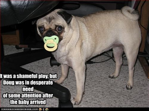 attention,baby,desperate,human,nuk,pacifier,pug