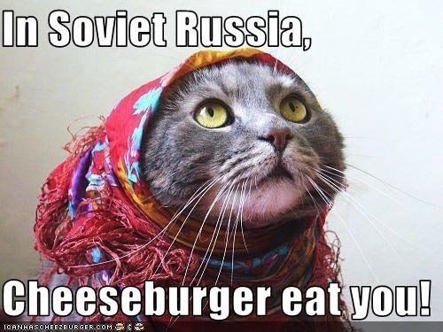 Cheezburger Image 2200439552
