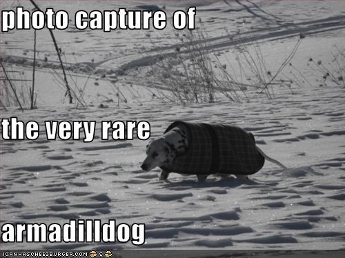 armadillo,coat,dalmatian,jacket,lookalike,rare,snow