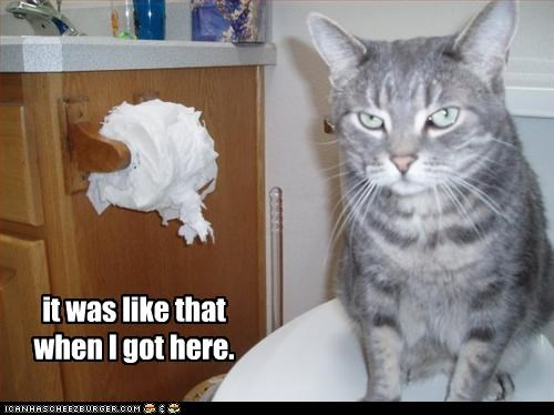 bad cat,denial,lies,mess,toilet paper